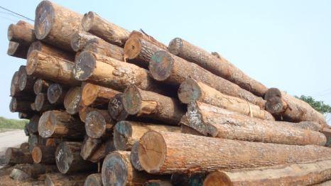 Making Wood Pellets from Logs